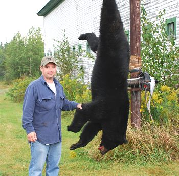 Maine bear hunting at Kokadjo