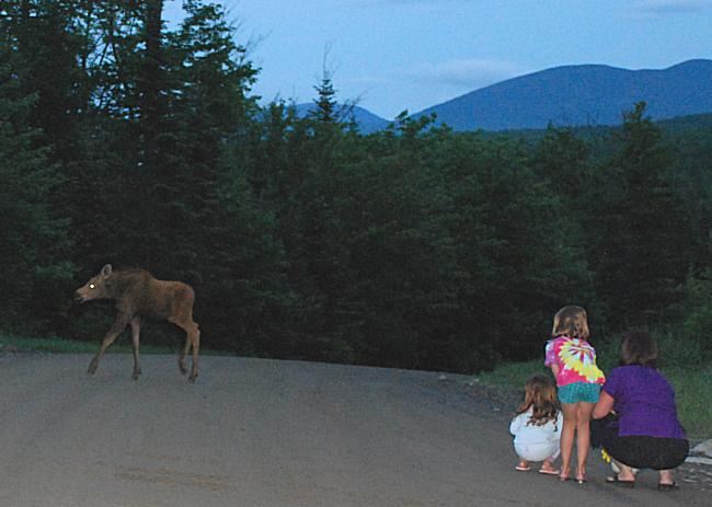Kids watching moose calf in Kokadjo, Maine